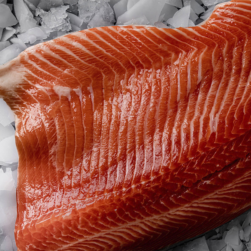 Photo of Ocean Trout